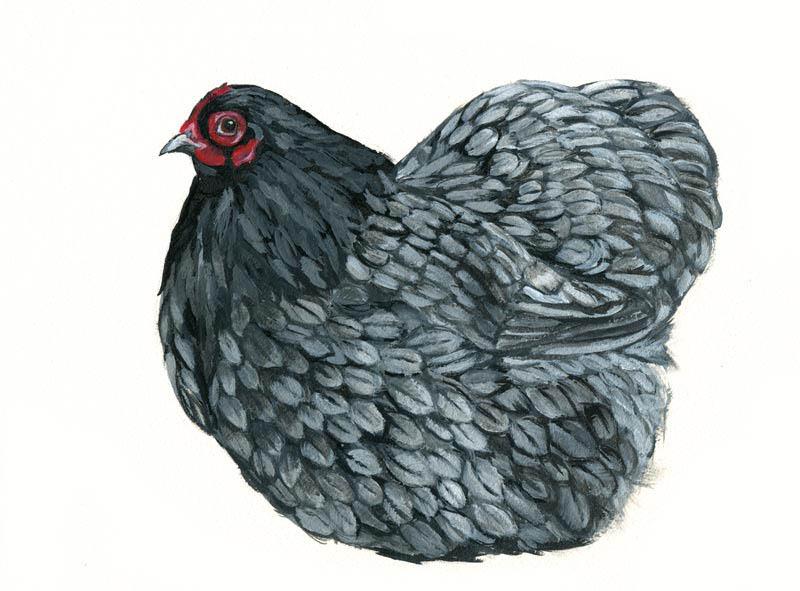 lavenderhen